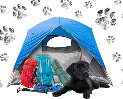 What You Should Consider When Camping With A Puppy